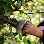 מתי צריך להזמין גוזם עצים?