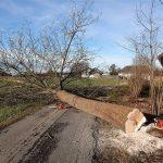 5 יתרונות של גיזום עצים ברחובות